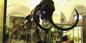 Экскурсия в зоологический музей
