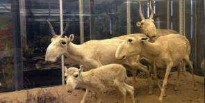 Экскурсии в зоологический музей Санкт-Петербурга